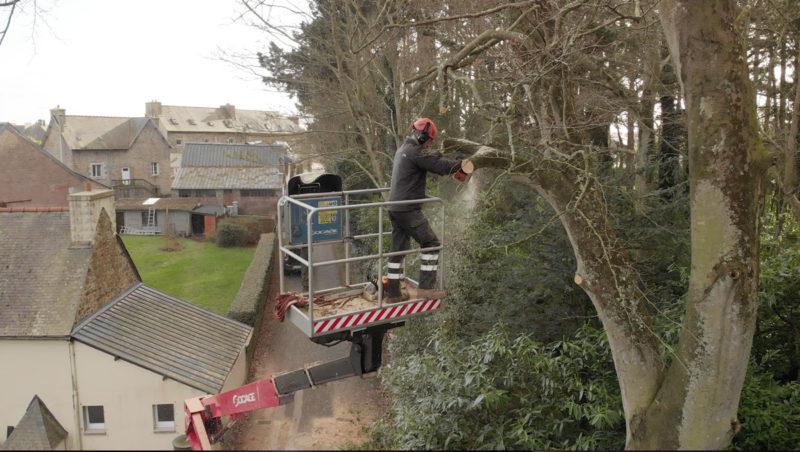 Elagage et démontage d'un arbre dangereux dans les côtes d'Armor