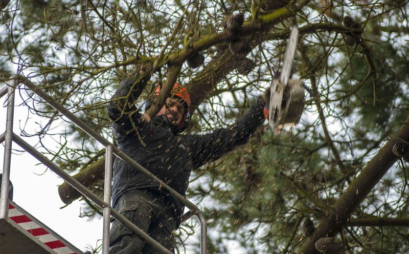 Taille des arbres par Arbor création Lézardrieux
