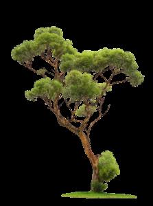 élagage d'arbre dans les côtes d'armor